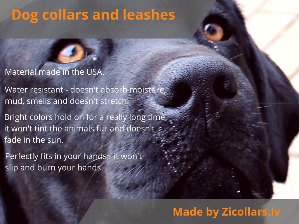 Dog collars and leashes | Zicollars.eu
