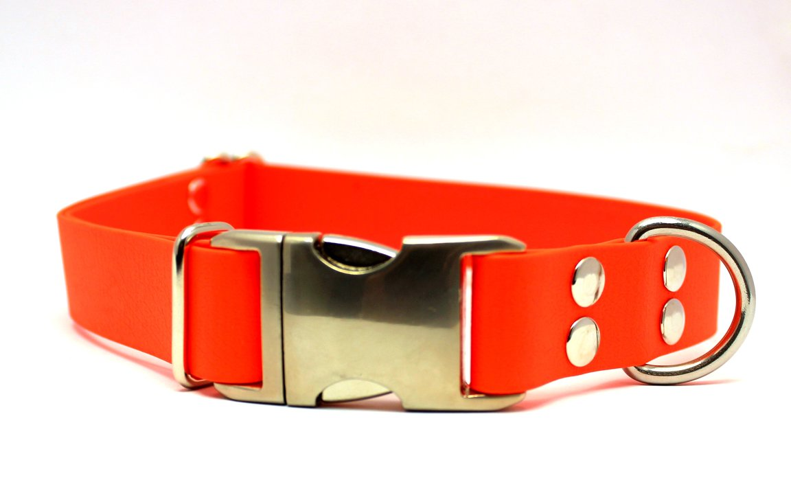 Stilīga oranža suņu kaklasiksna Zicollars labi kalpo un izskatās lieliski
