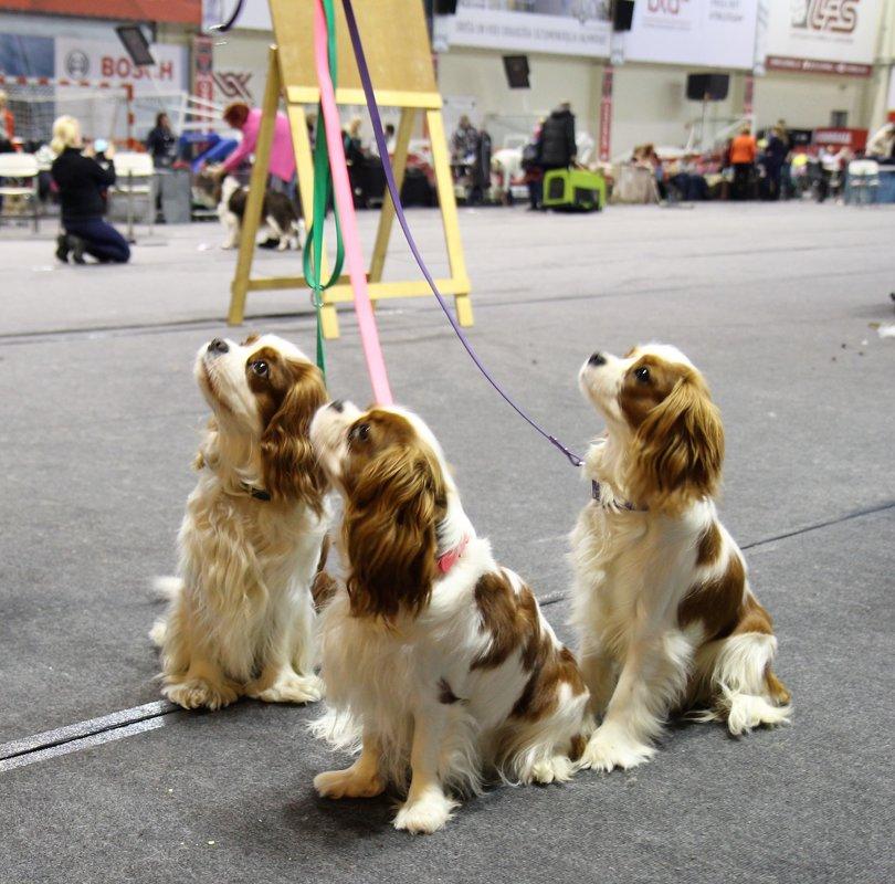 Dog collars Combo 1, width 1.9 cm