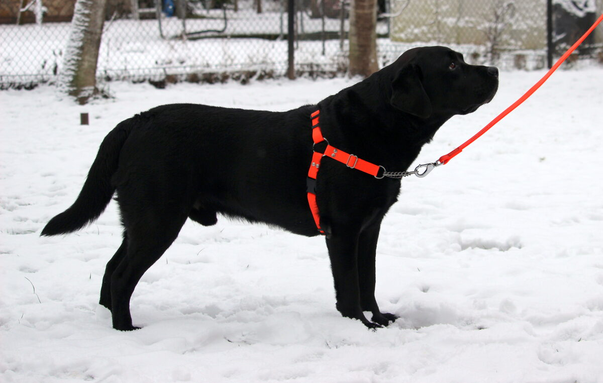 Anti pull dog harness